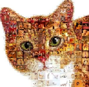 Cat Mosaic Collage