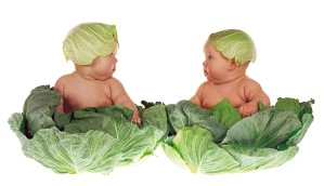 Cabbage Babies