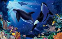 Orca Sanctuary