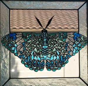 Firecracker Butterfly