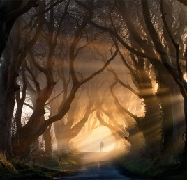 Dark Beech Hedges, Northern Ireland