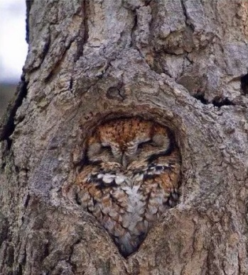 Owl Fitting In