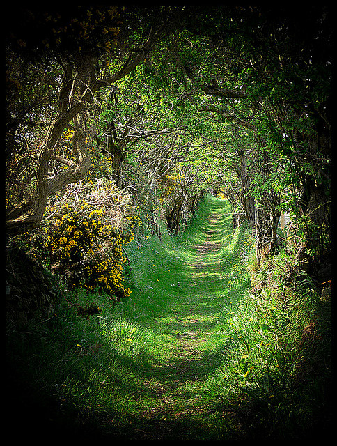 Tree Tunnel, Ireland