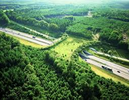 Wildlife Bridge, Netherlands